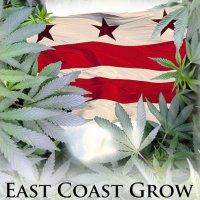 East Coast Grow – A Lighter Look At D.C.'s Cannabis Industry