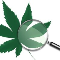University Of Vermont Offers Medicinal Cannabis Course