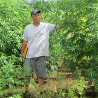 Industrial Hemp - Hawaii University