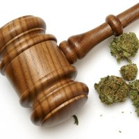 Medical Cannabis Court Case - New Zealand