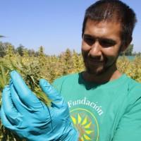 Medical marijuana - Chile