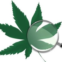 Medical Cannabis Laws And Youth Use