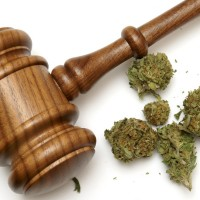 Legalising medical cannabis in Canberra