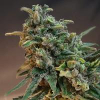 Hawaii cannabis dispensary