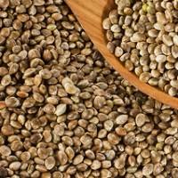 Australian hemp seed