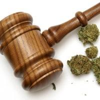 Medical marijuana case - Gipplsand