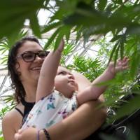 New Mexico medical marinjuana program