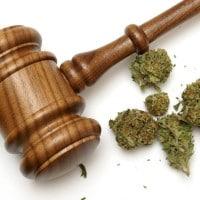 Medicinal marijuana prosecutions