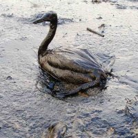 Industrial hemp - oil spill solution