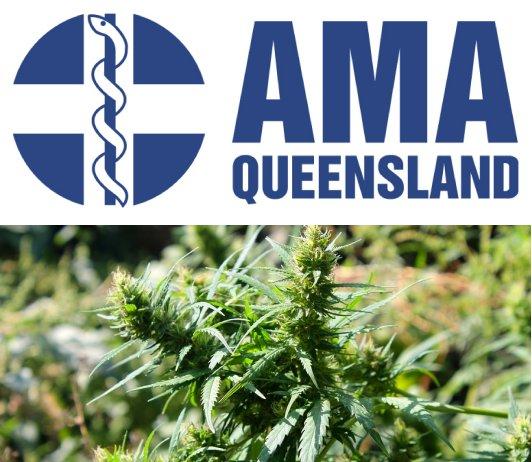 AMA Queensland - Medicinal Marijuana