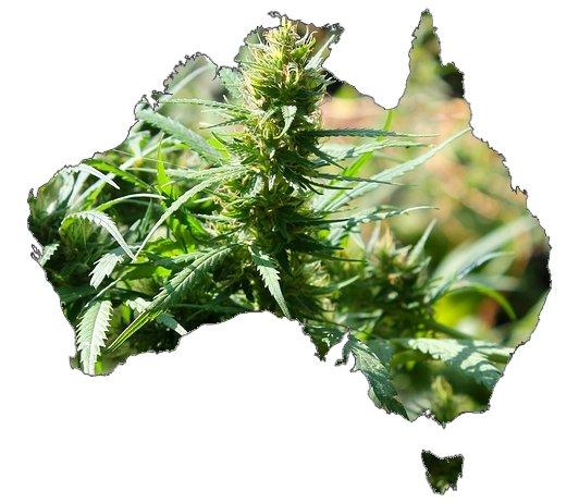Australia medical marijuana regulations