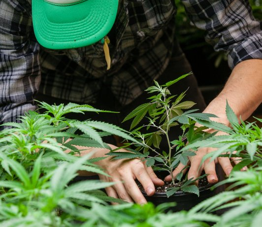 Cottage Cannabis Farming Bill