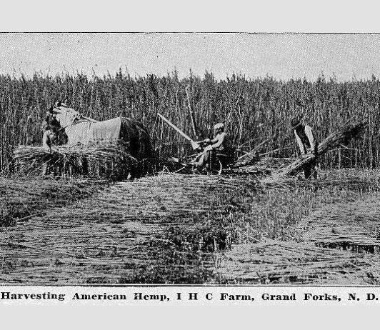 North Dakota Industrial Hemp