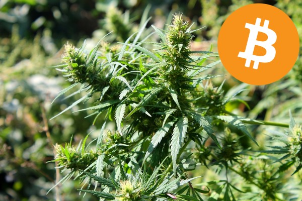 Bitcoin - Cannabis and hemp industry