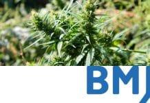 British Medical Journal - Medicinal Marijuana