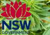 NSW cannabis cancer trial