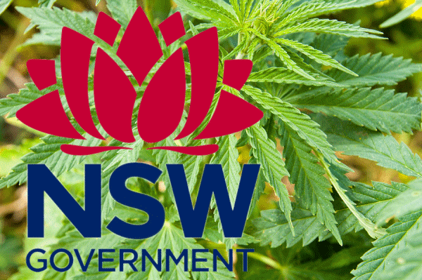 NSW cannabis cancer trial