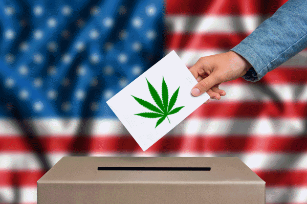 USA Votes On Medical Cannabis