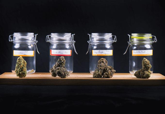 Cannabis dispensaries - staff training