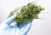 Cannabis vaping trial - Australia