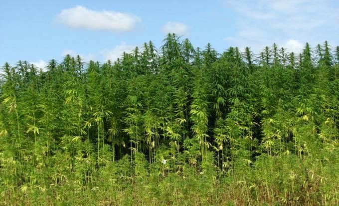 Hemp and Cannabis meeting - South Australia
