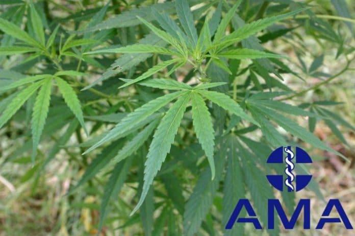 AMA - Medicinal marijuana in Australia