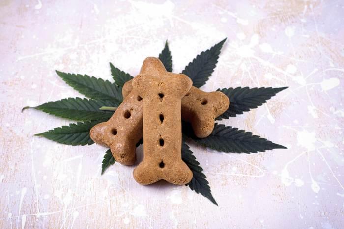 Cannabidiol cannabis medicine for pets