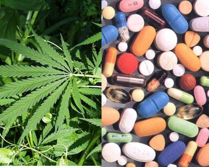 Cannabis vs. opioids