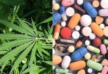 Cannabis reducing benzodiazepine use