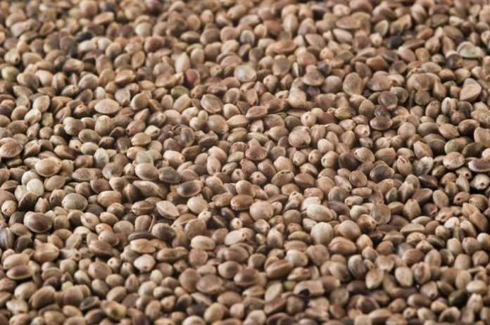 Hemp seeds as food in Australia