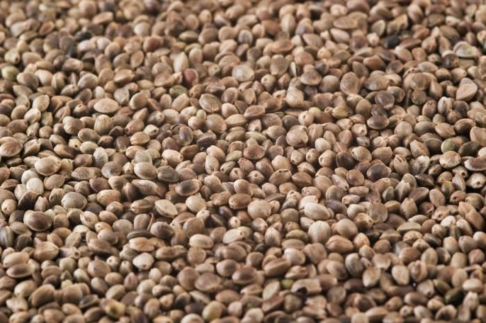 Australian/New Zealand Ministers Finally OK Hemp Seeds As Food