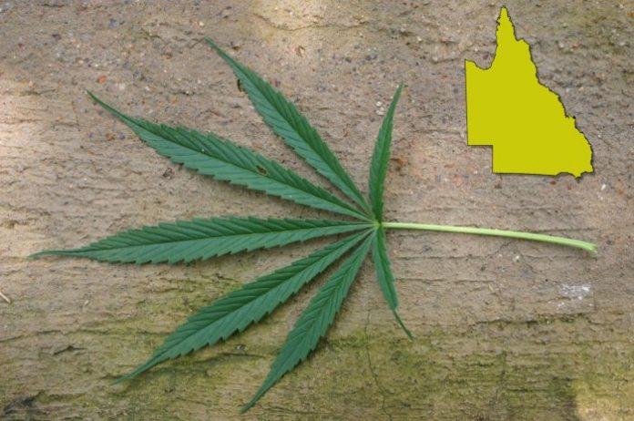 Cannabis prescribers in Queensland