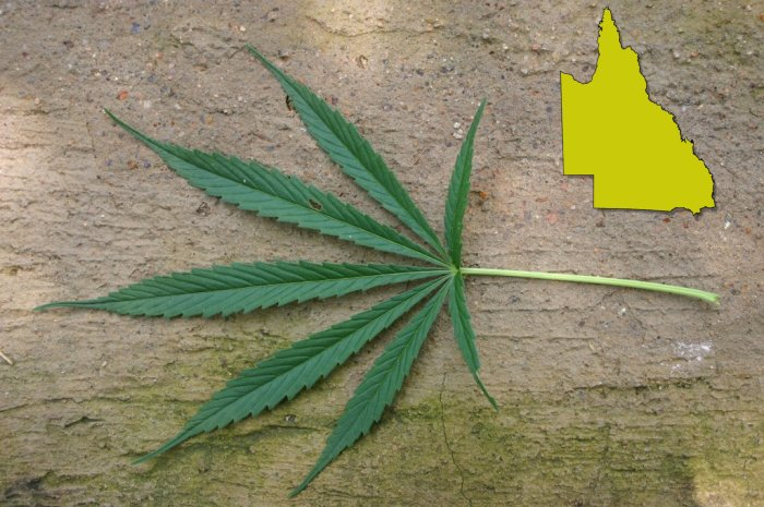 Medical Cannabis Prescribers Remain A Rarity In Queensland