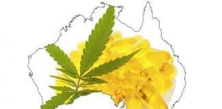 Accessing medicinal cannabis in Australia