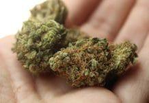 Rohrabacher-Blumenauer amendment - medical cannabis