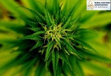 Australian rural doctors and medical marijuana