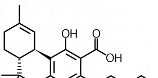 Tetrahydrocannabinolic acid (THCA)