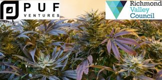 Medical cannabis cultivation greenhouse for New South Wales
