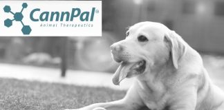 CannPal cannabinoid trial with dogs