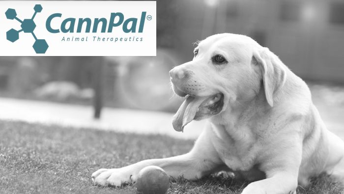 Australia's CannPal Gets Approval For Canine Cannabinoid Trial