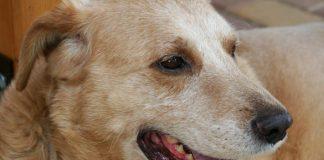Cannabidiol and dogs - epilepsy and osteoarthritis