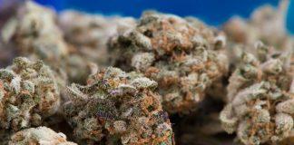 Medicinal marijuana in Hawaii