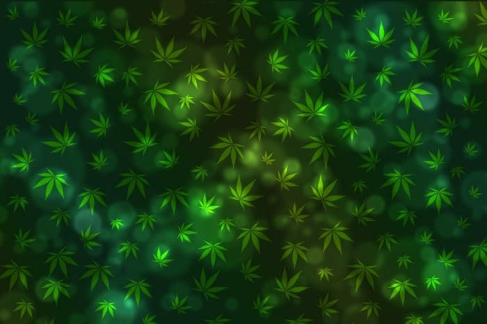 Paediatric Epilepsy Medical Cannabis Forum In Townsville