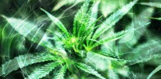 Medicinal marijuana in Maryland