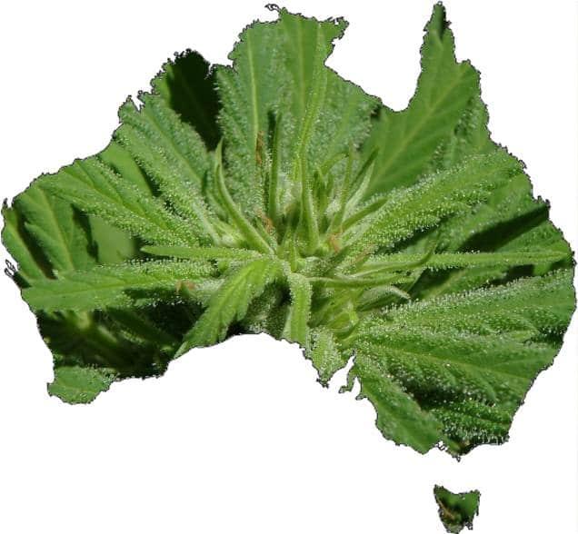 Australian Cannabis News Roundup, December 11
