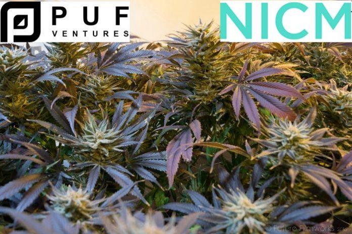 PUF Ventures Australia - Medicinal Cannabis