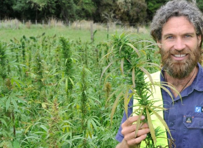 Hikurangi Hemp - New Zealand