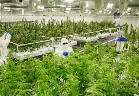 Medicinal cannabis in Victoria