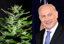 Medicinal marijuana exports in Israel