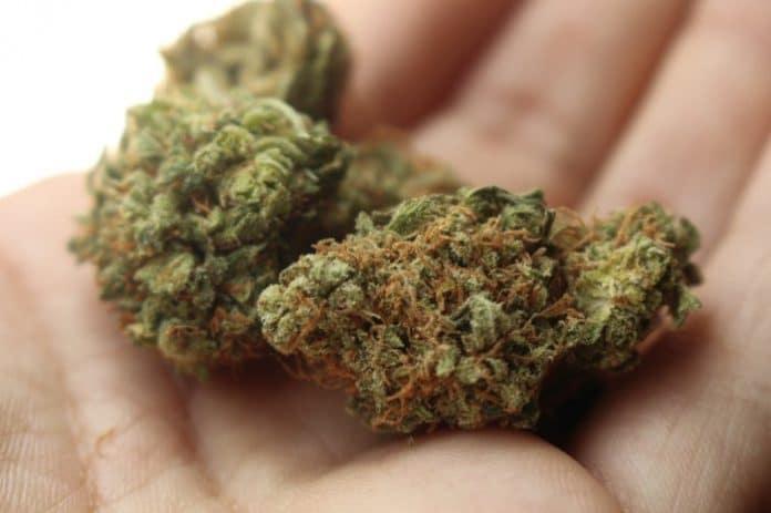 Cannabis worker survey